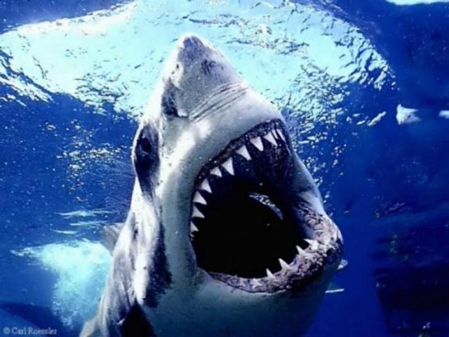 fake holy creap tht fake shark